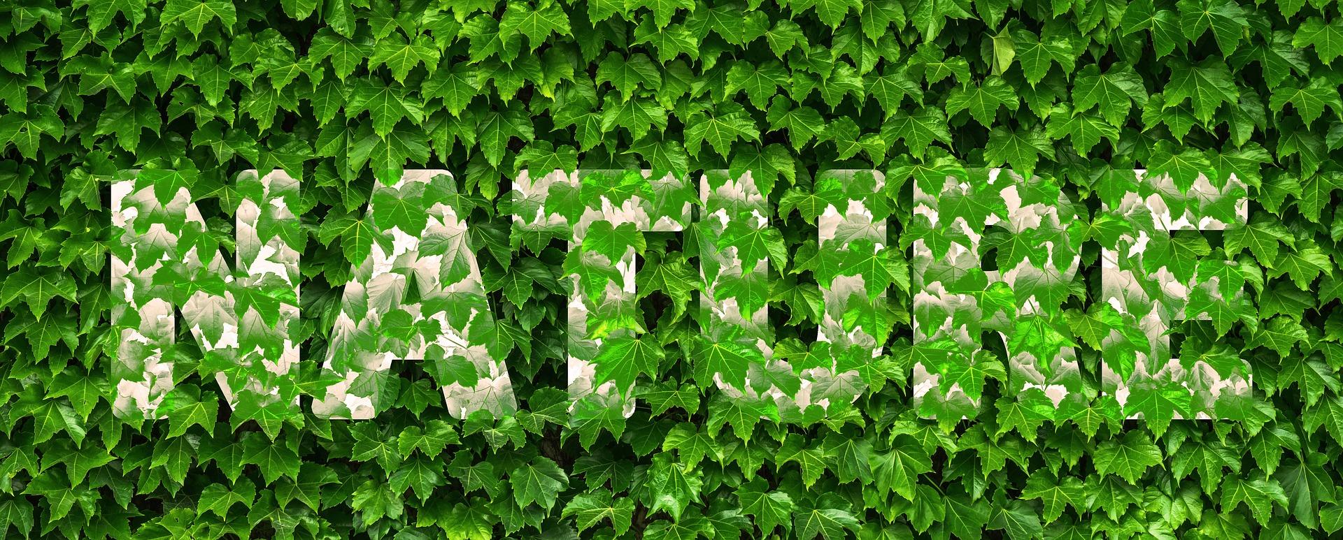 Lierre lessive maison naturelle et écologique
