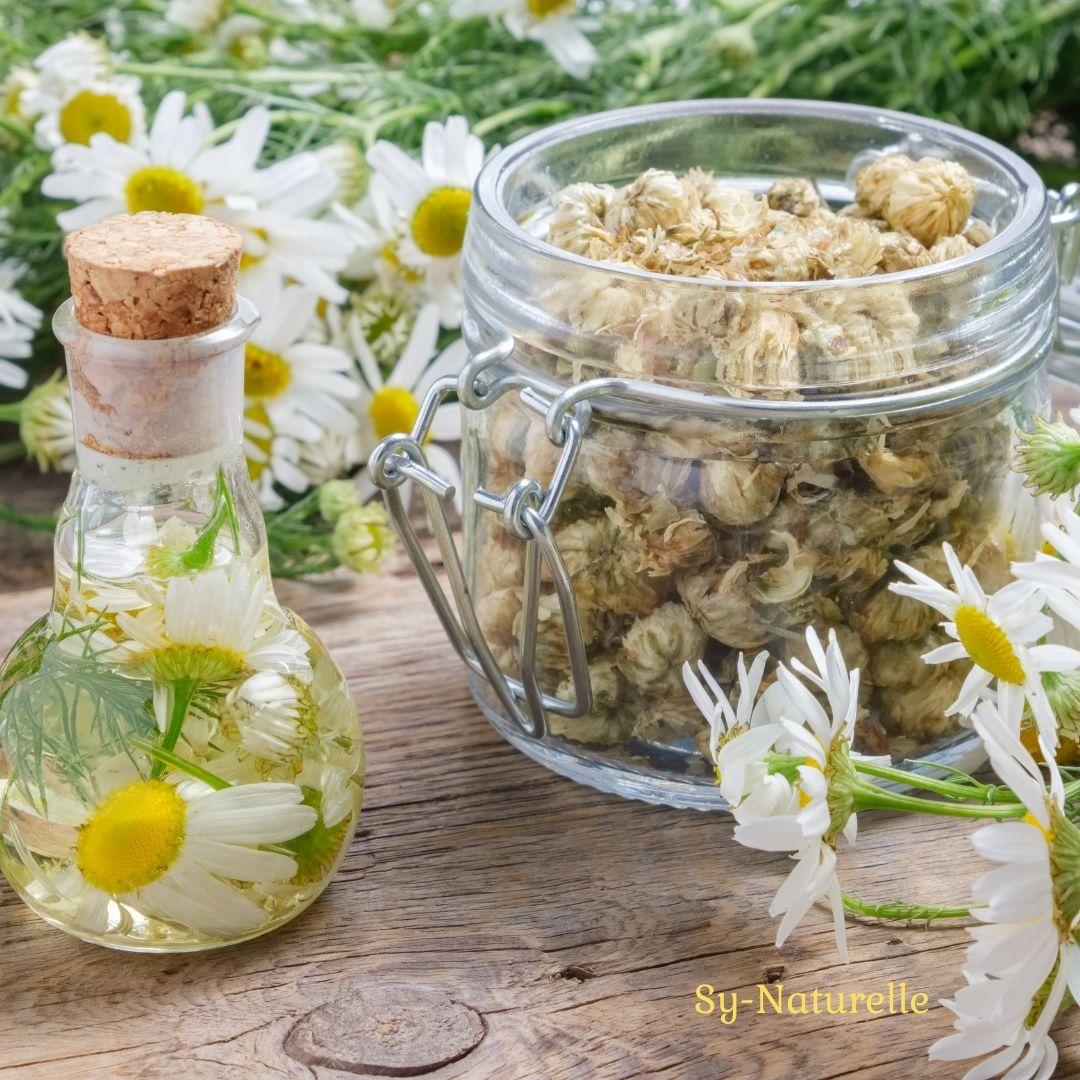cosmetique maison macerat huileux de paquerette huile raffermissante